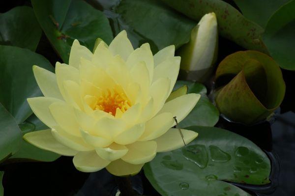 Основным символом Богини Тары ...: amarillis.at.ua/index/0-21